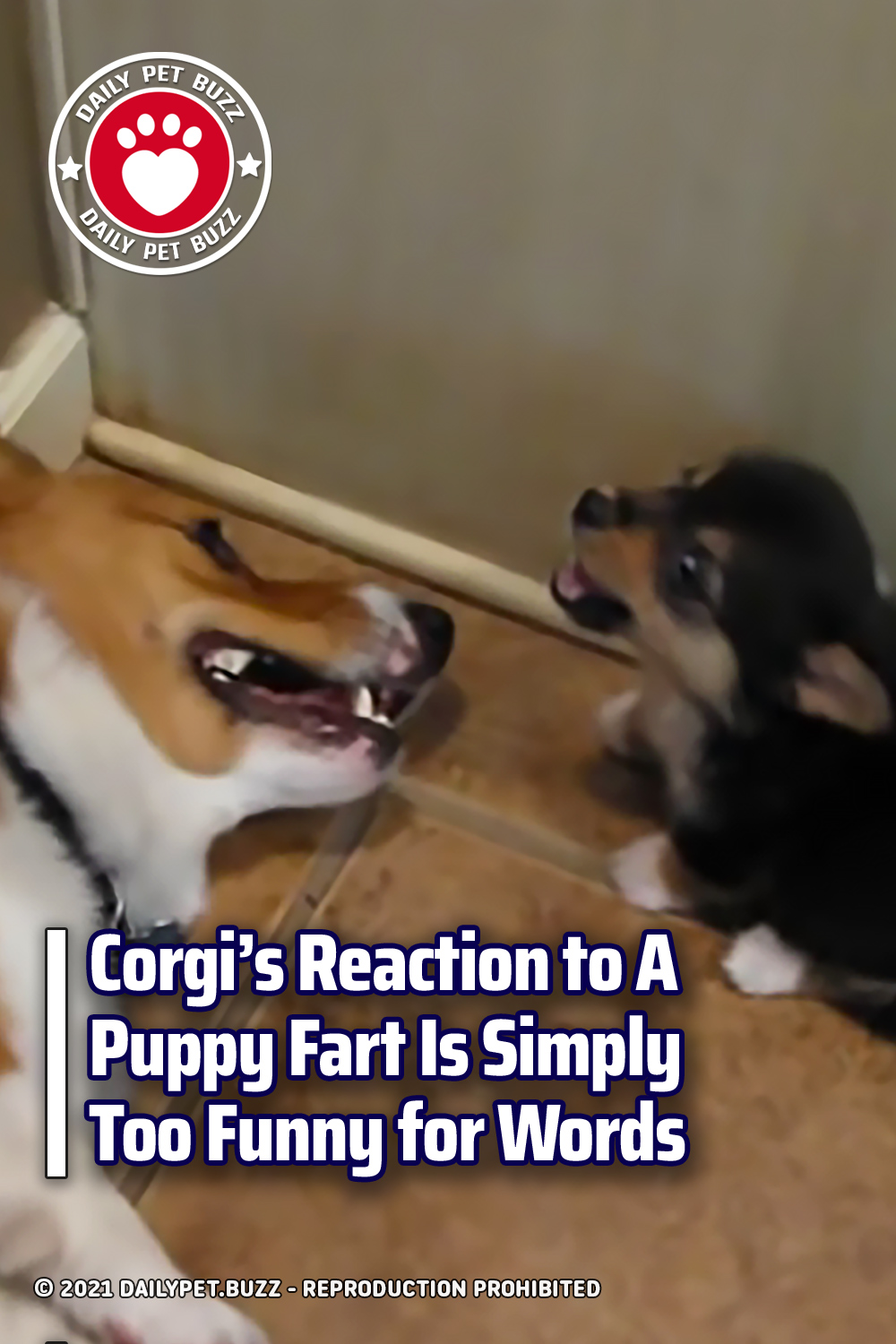 Corgi's Reaction to A Puppy Fart Is Simply Too Funny for Words