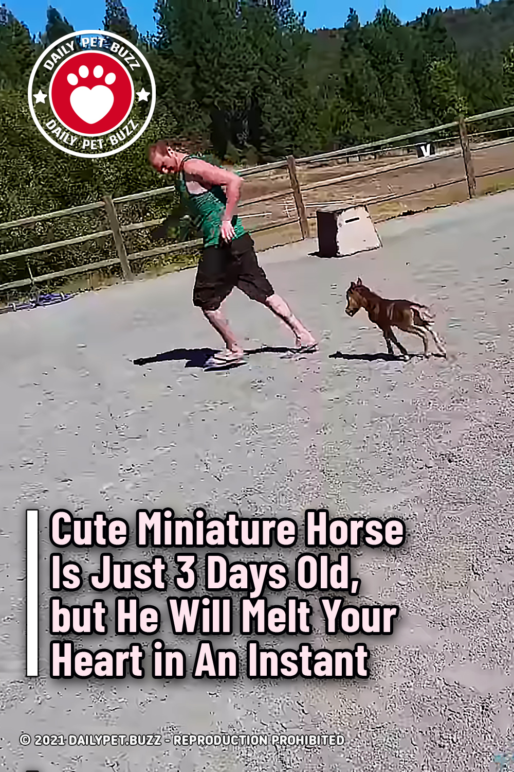 Cute Miniature Horse Is Just 3 Days Old, but He Will Melt Your Heart in An Instant