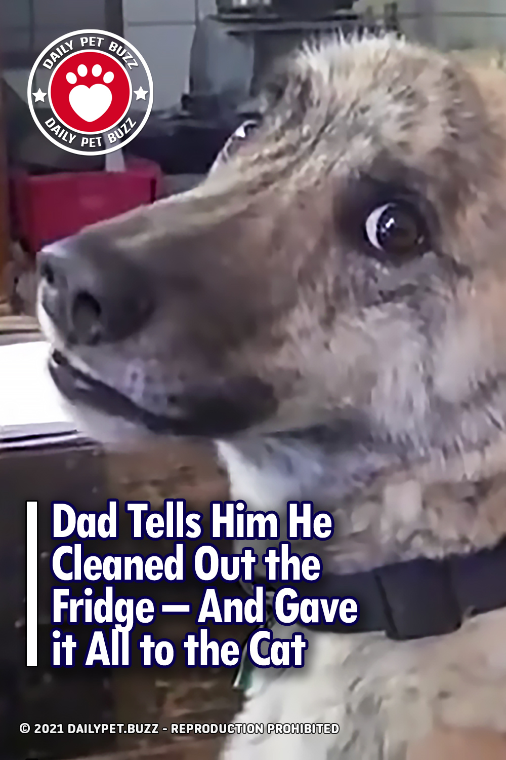 Dad Tells Him He Cleaned Out the Fridge - And Gave it All to the Cat