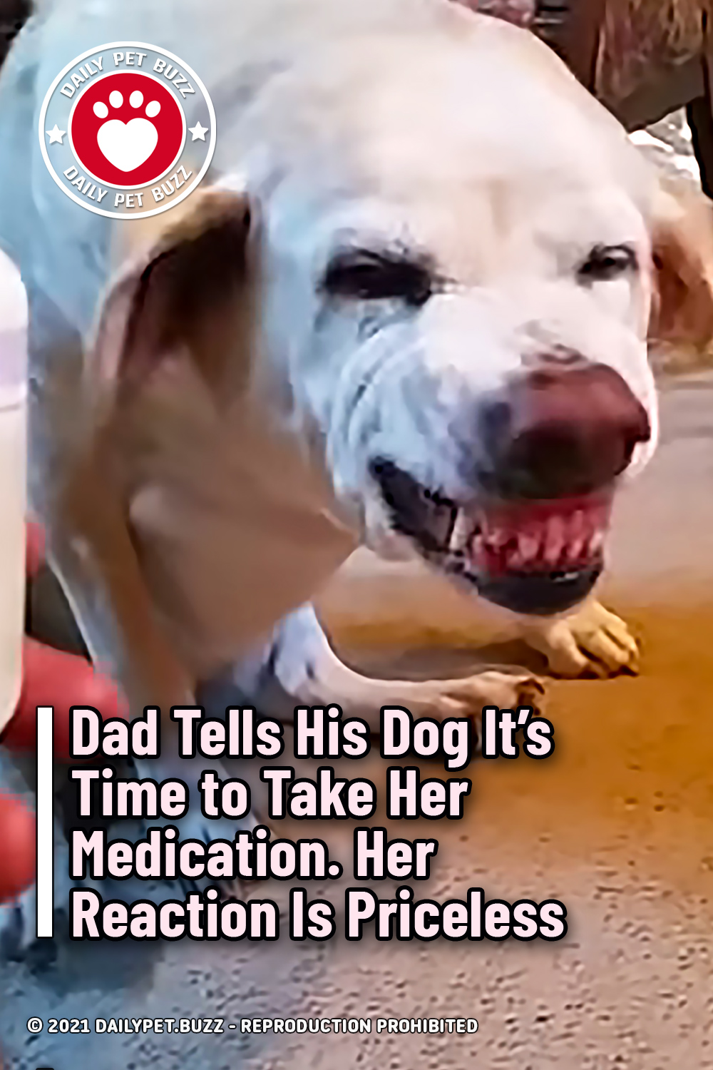 Dad Tells His Dog It\'s Time to Take Her Medication. Her Reaction Is Priceless