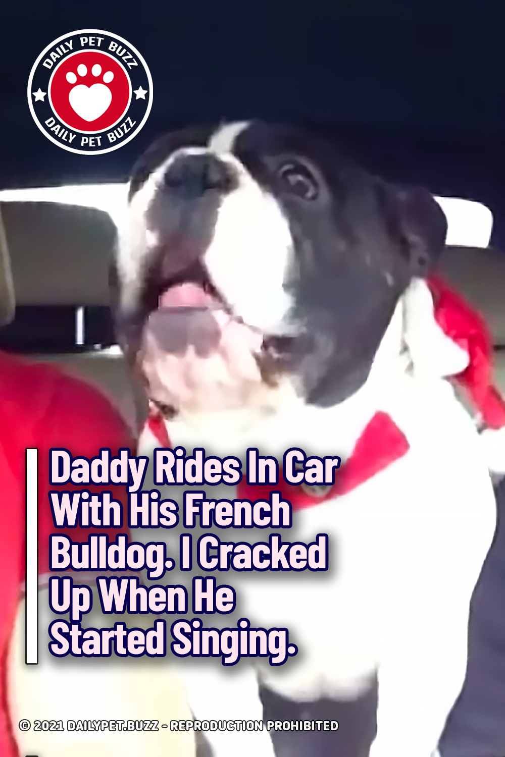 Daddy Rides In Car With His French Bulldog. I Cracked Up When He Started Singing.