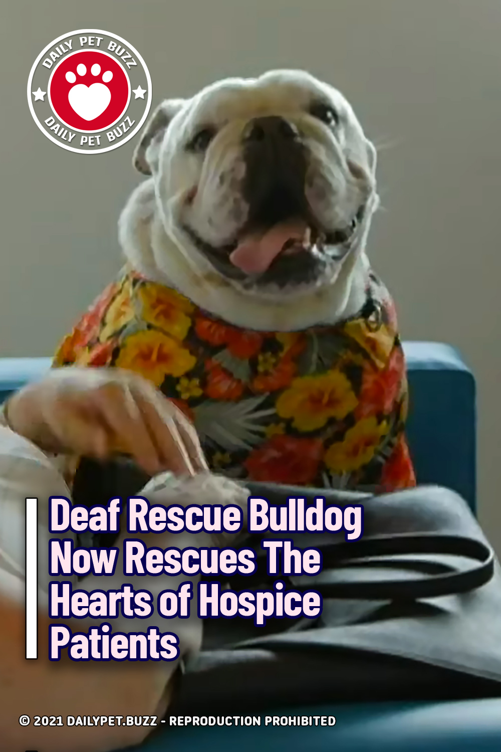 Deaf Rescue Bulldog Now Rescues The Hearts of Hospice Patients