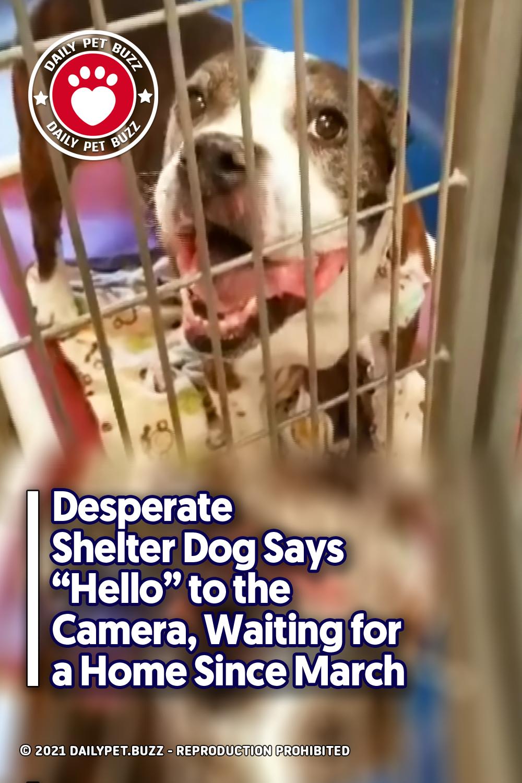 Desperate Shelter Dog Says \