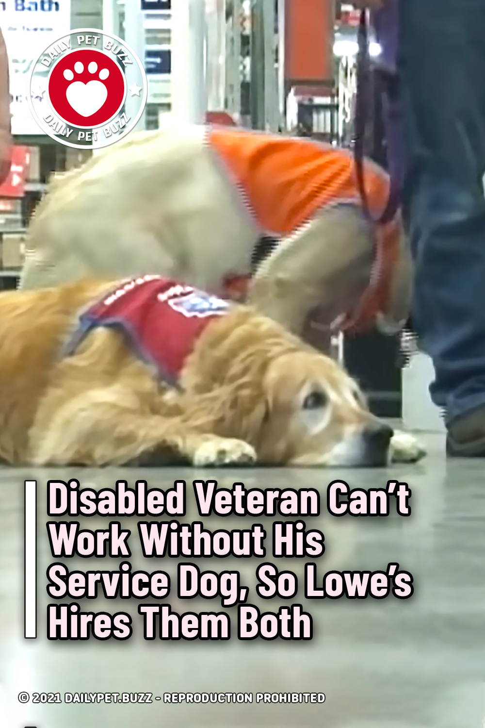 Disabled Veteran Can't Work Without His Service Dog, So Lowe's Hires Them Both
