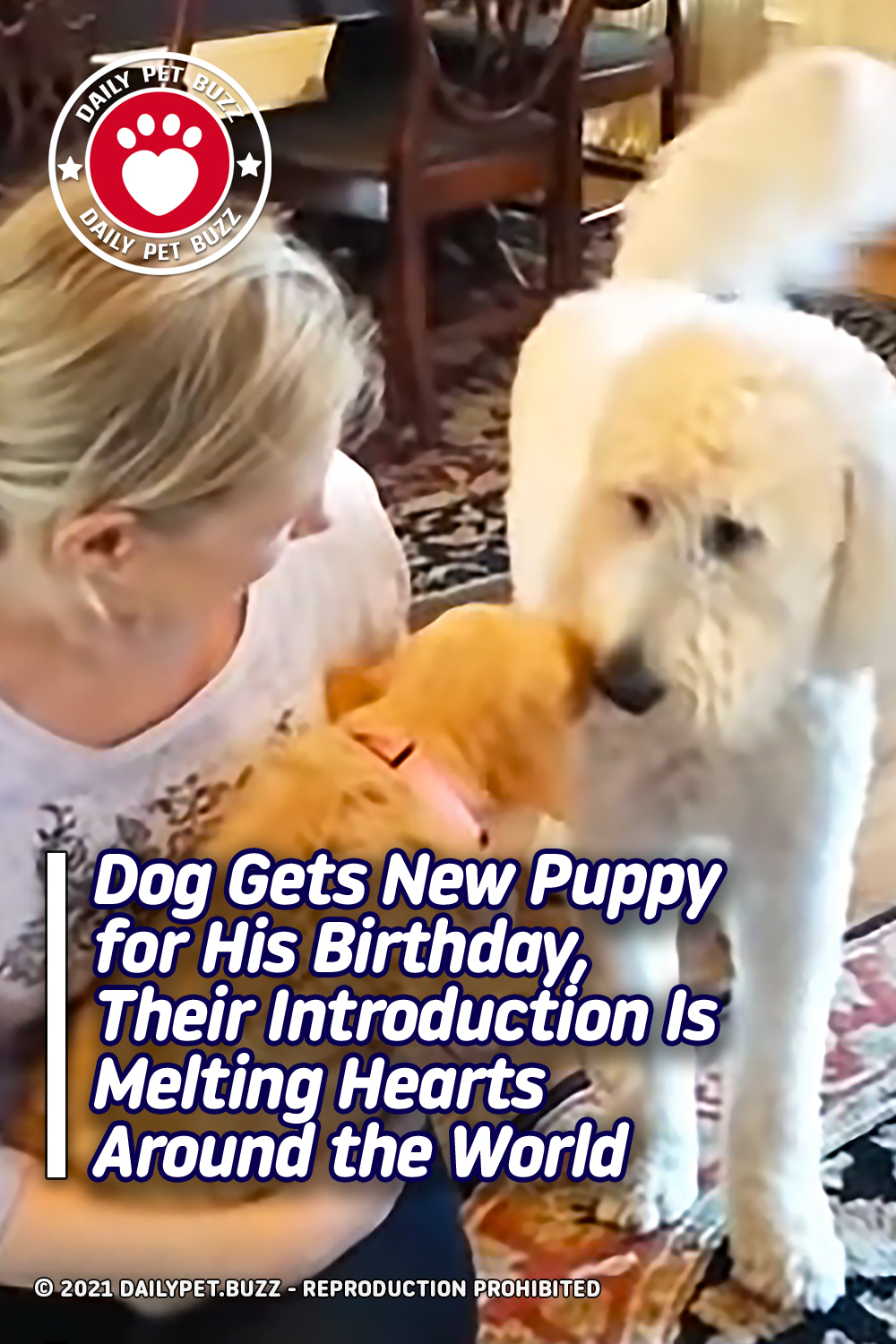 Dog Gets New Puppy for His Birthday, Their Introduction Is Melting Hearts Around the World