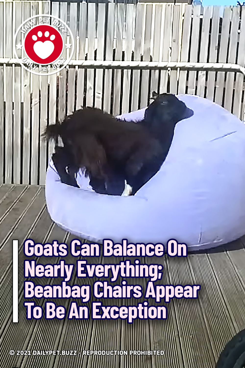 Goats Can Balance On Nearly Everything; Beanbag Chairs Appear To Be An Exception