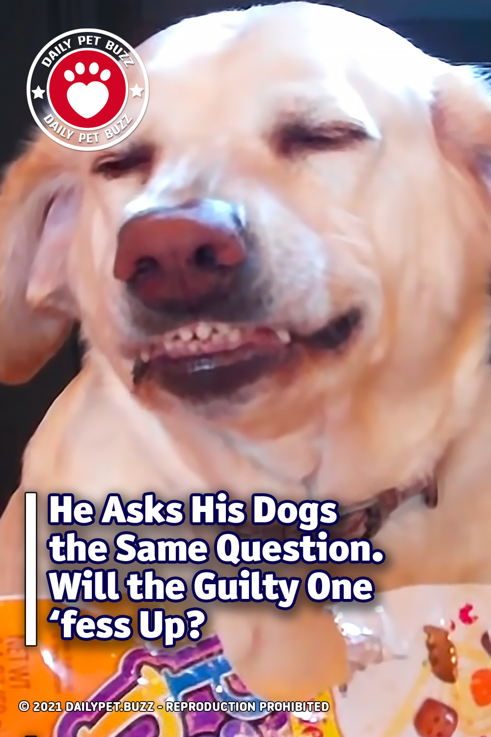 He Asks His Dogs the Same Question. Will the Guilty One \'fess Up?