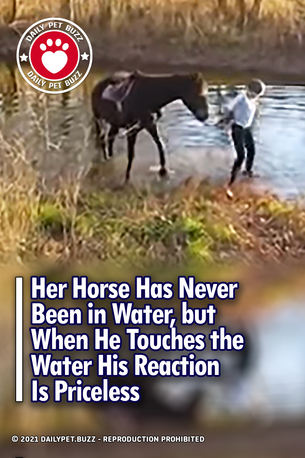 Her Horse Has Never Been in Water, but When He Touches the Water His Reaction Is Priceless