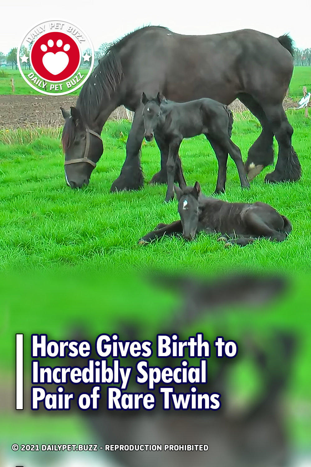 Horse Gives Birth to Incredibly Special Pair of Rare Twins