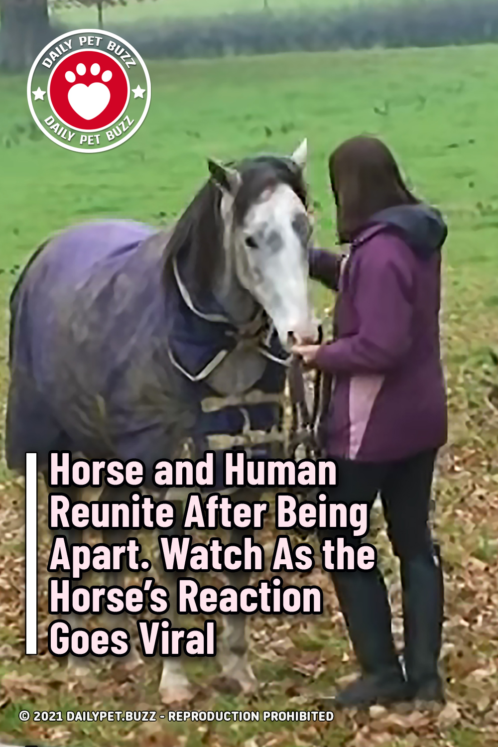 Horse and Human Reunite After Being Apart. Watch As the Horse's Reaction Goes Viral