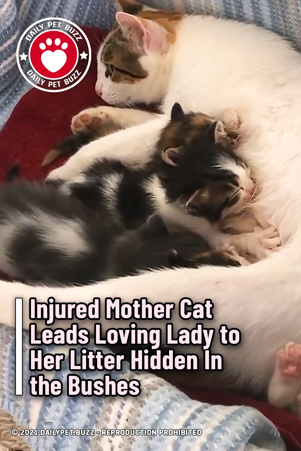 Injured Mother Cat Leads Loving Lady to Her Litter Hidden In the Bushes