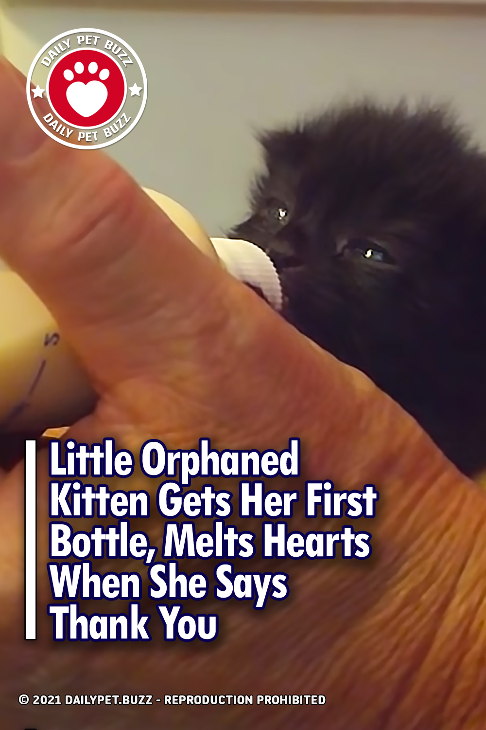 Little Orphaned Kitten Gets Her First Bottle, Melts Hearts When She Says Thank You
