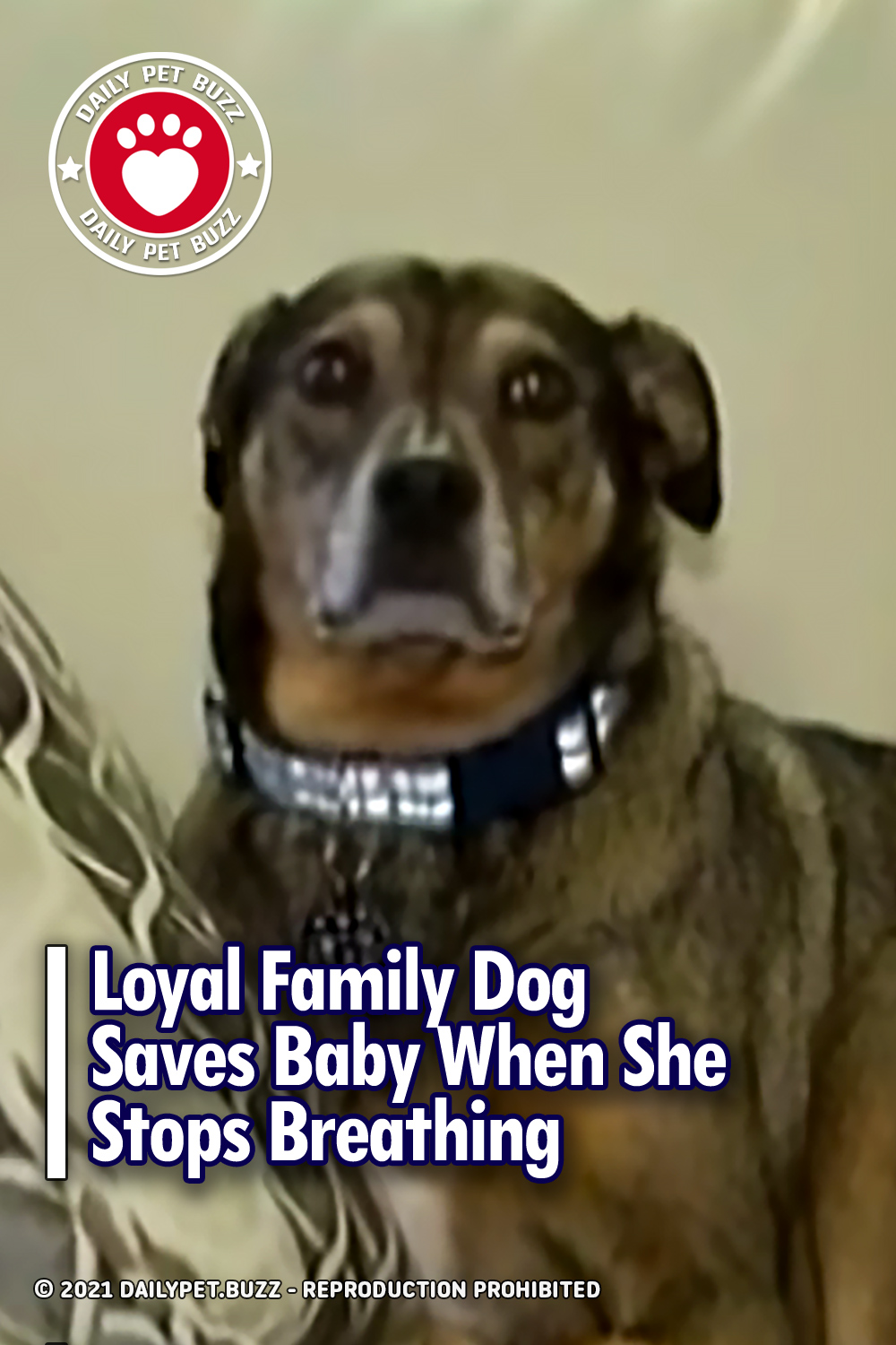 Loyal Family Dog Saves Baby When She Stops Breathing