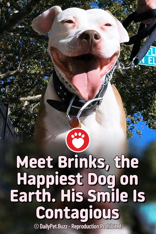 Meet Brinks, the Happiest Dog on Earth. His Smile Is Contagious