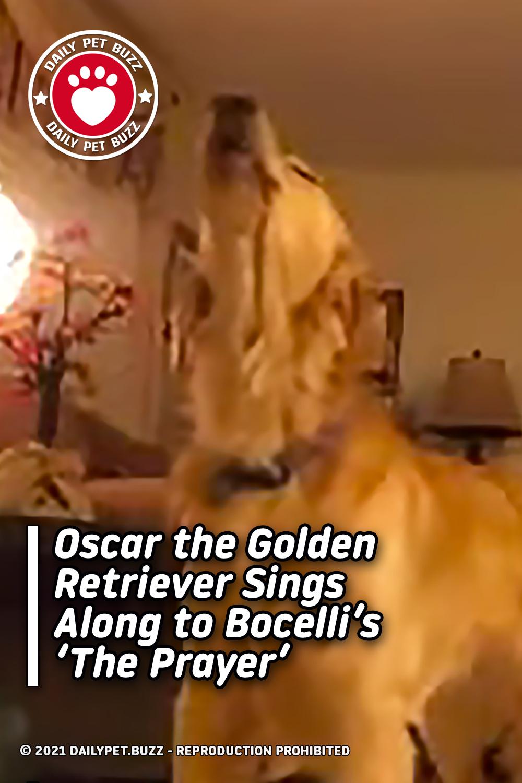 Oscar the Golden Retriever Sings Along to Bocelli\'s \'The Prayer\'