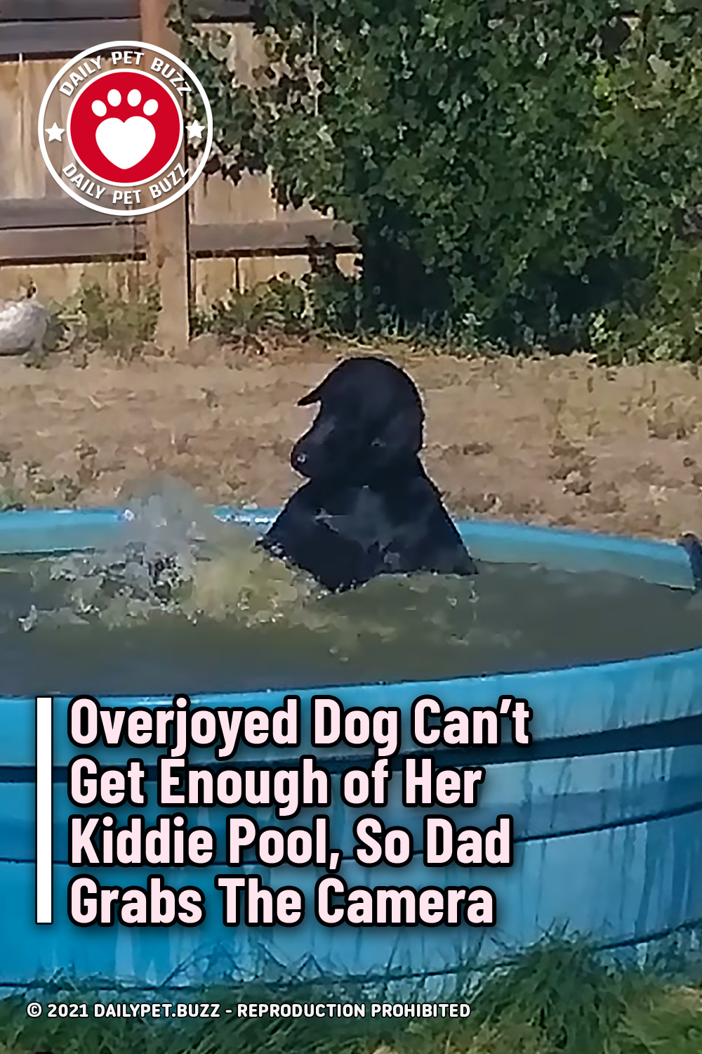 Overjoyed Dog Can\'t Get Enough of Her Kiddie Pool, So Dad Grabs The Camera