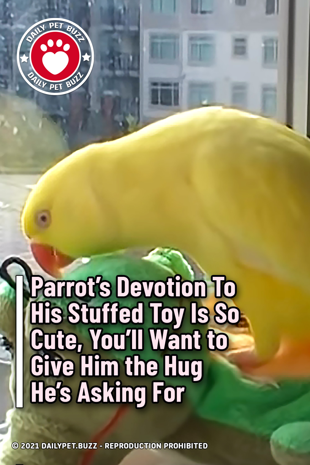 Parrot\'s Devotion To His Stuffed Toy Is So Cute, You\'ll Want to Give Him the Hug He's Asking For