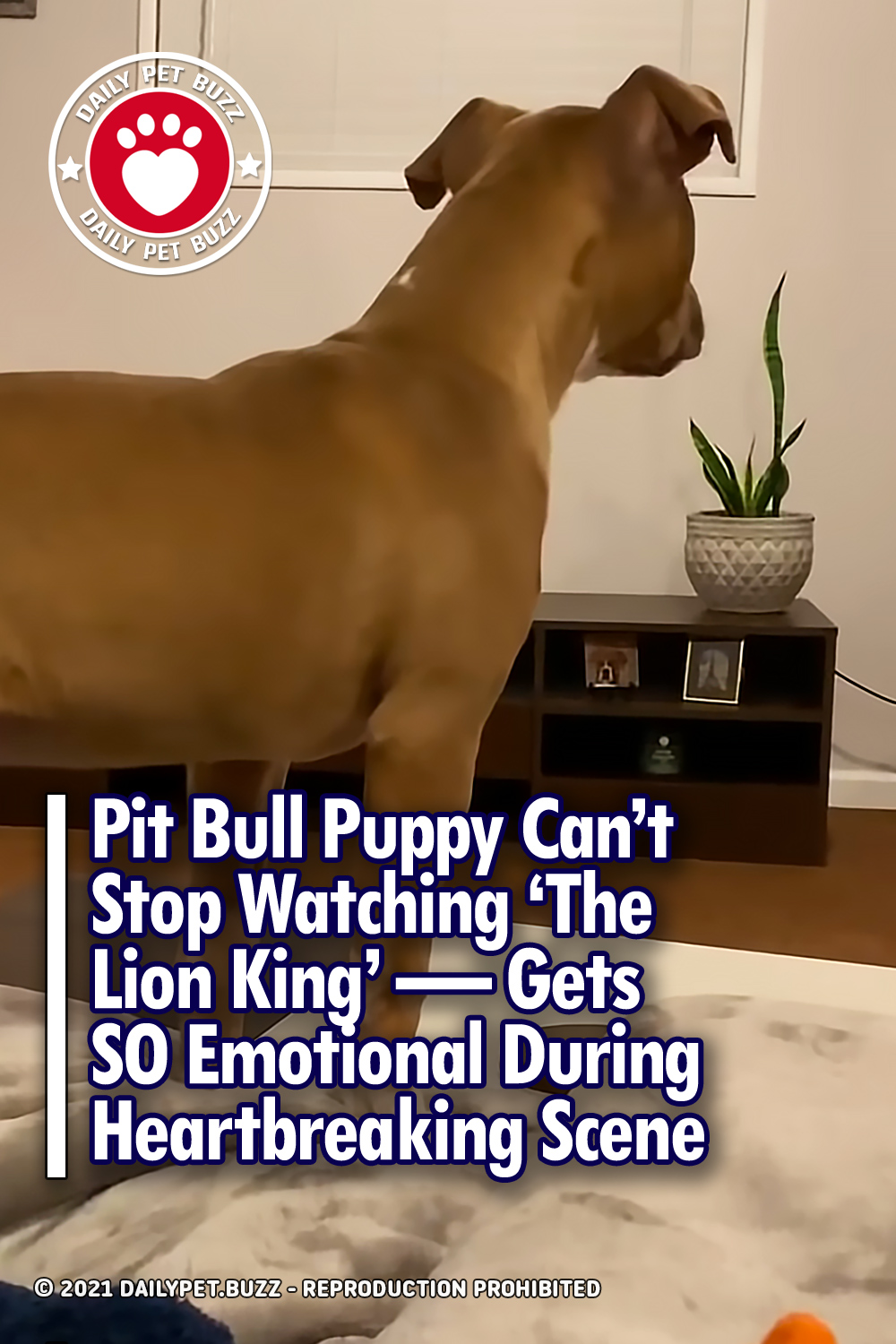 Pit Bull Puppy Can\'t Stop Watching 'The Lion King' — Gets SO Emotional During Heartbreaking Scene