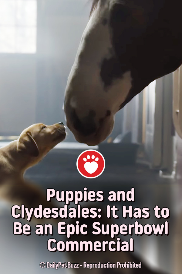 Puppies and Clydesdales: It Has to Be an Epic Superbowl Commercial