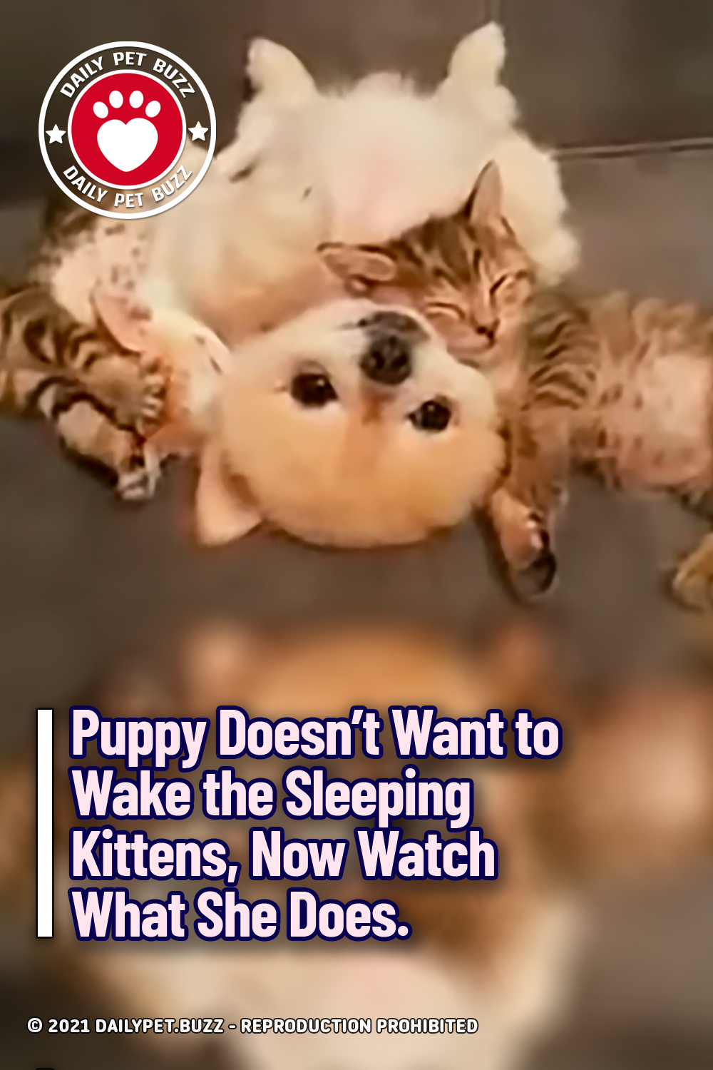 Puppy Doesn\'t Want to Wake the Sleeping Kittens, Now Watch What She Does.