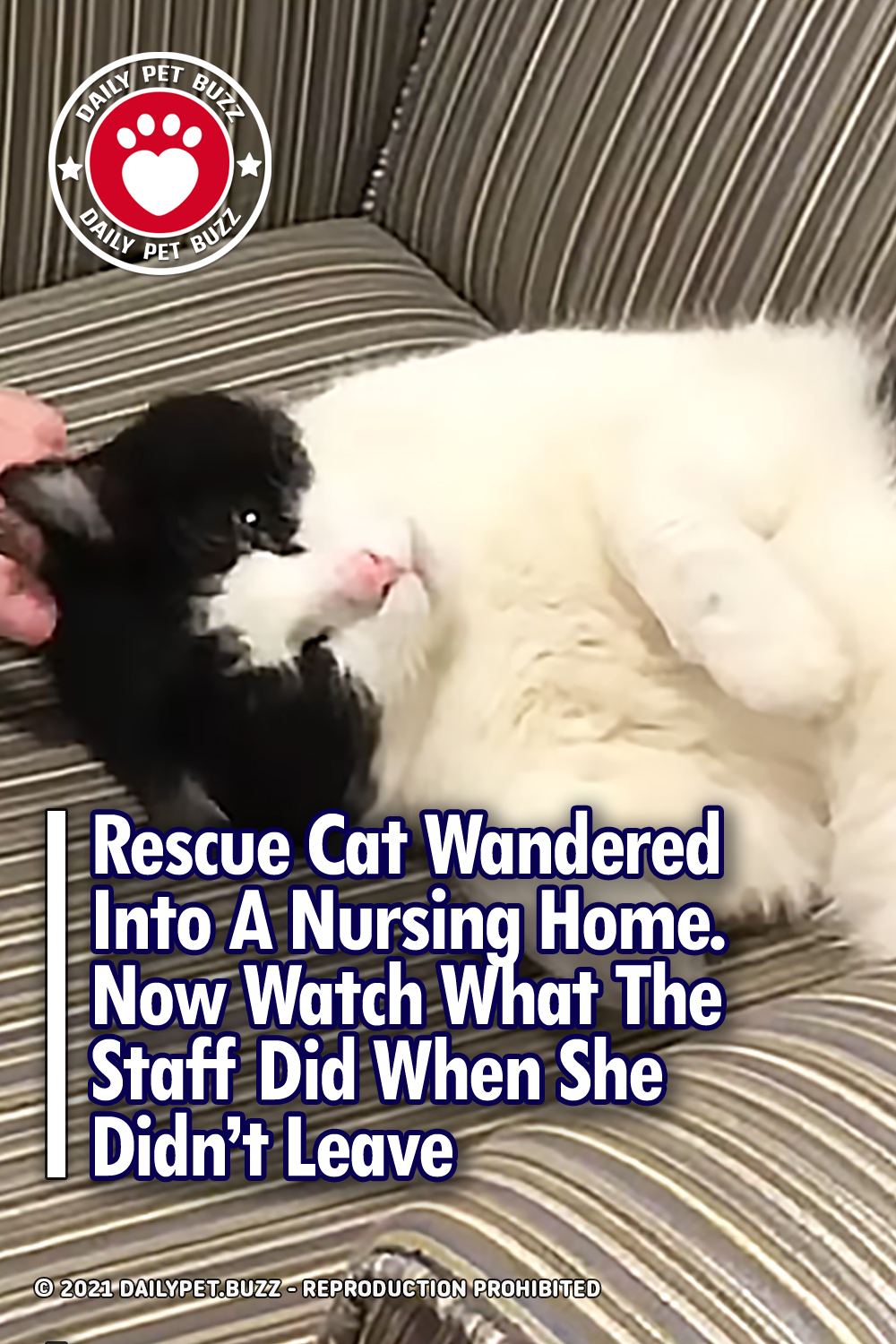Rescue Cat Wandered Into A Nursing Home. Now Watch What The Staff Did When She Didn\'t Leave