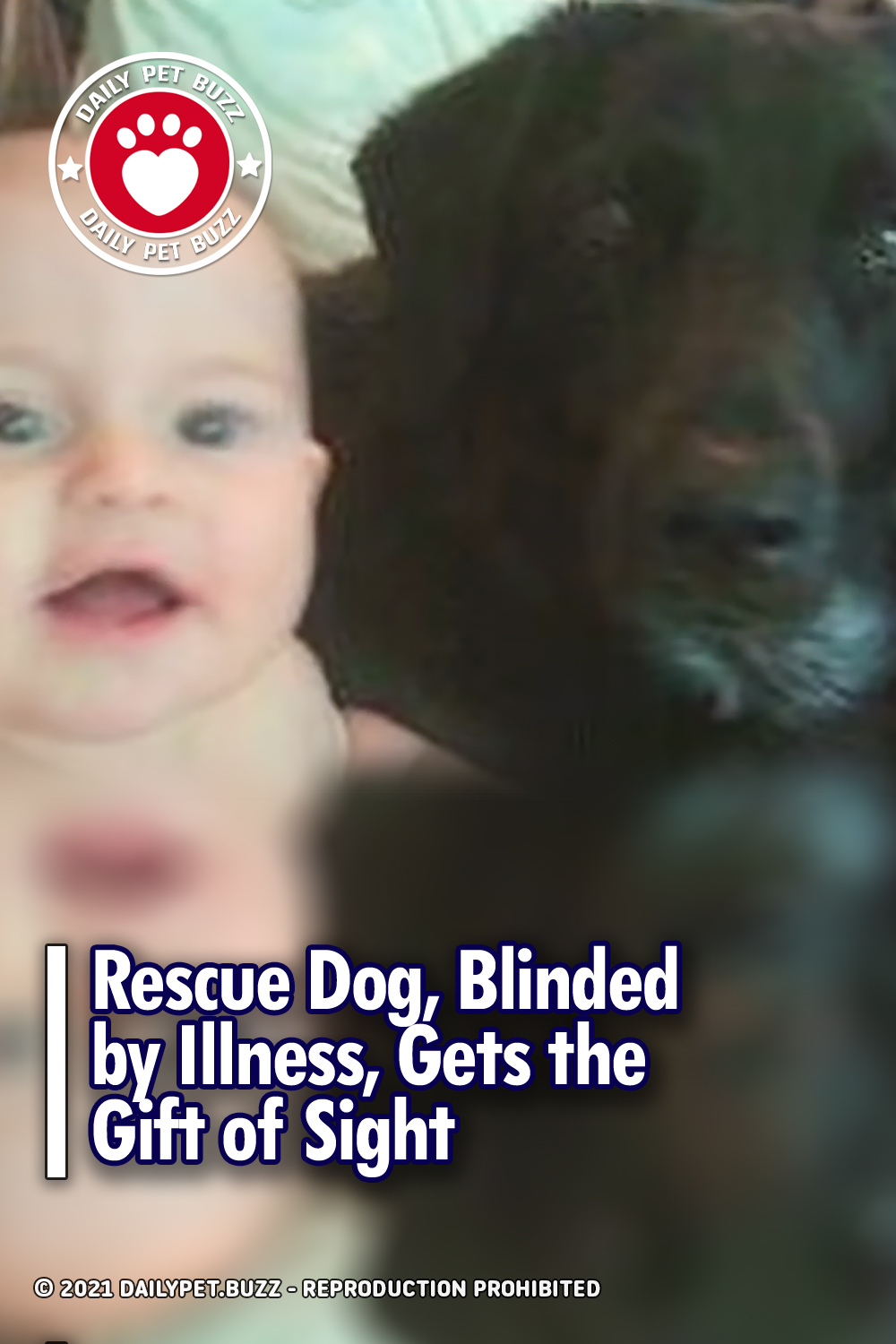 Rescue Dog, Blinded by Illness, Gets the Gift of Sight