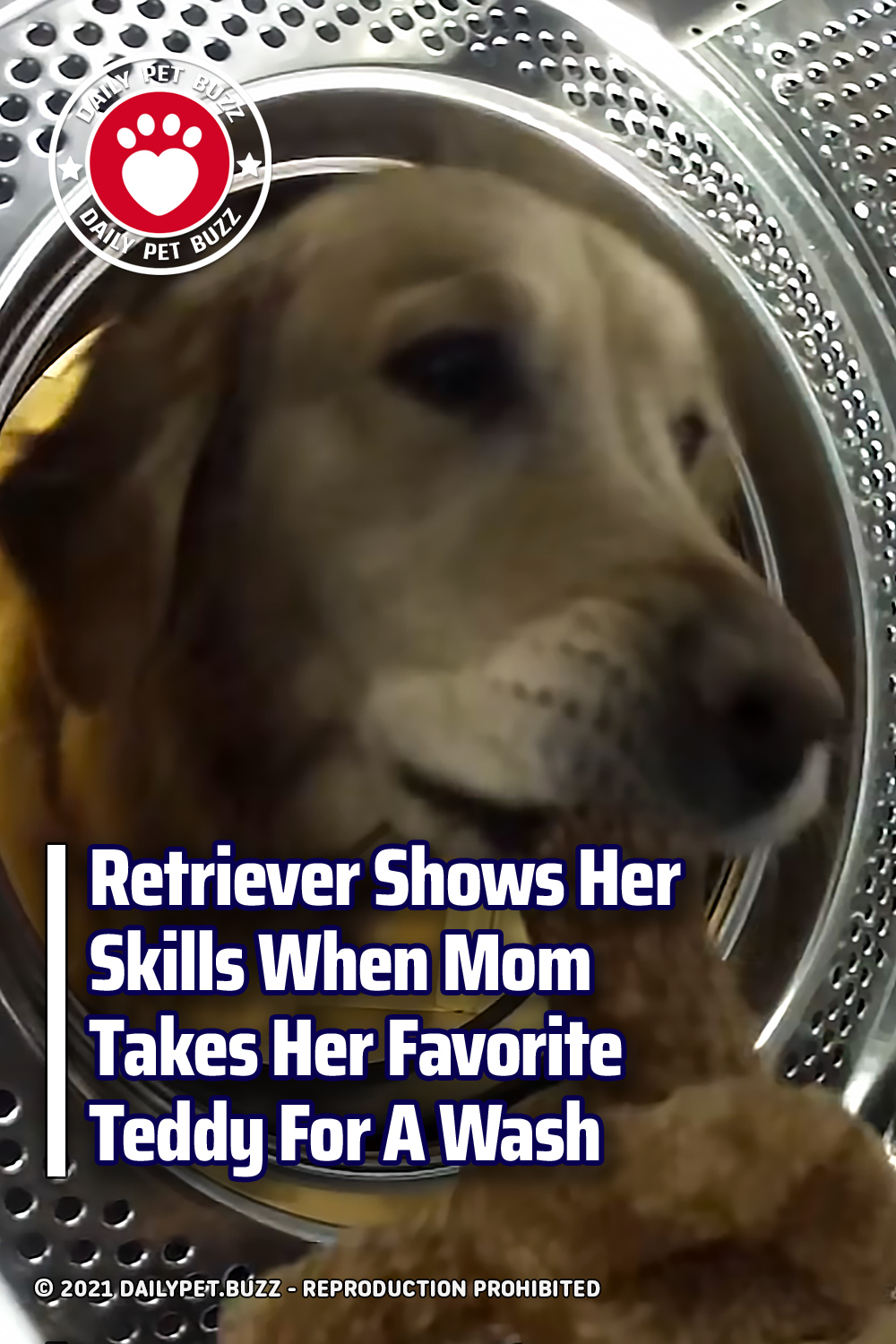 Retriever Shows Her Skills When Mom Takes Her Favorite Teddy For A Wash