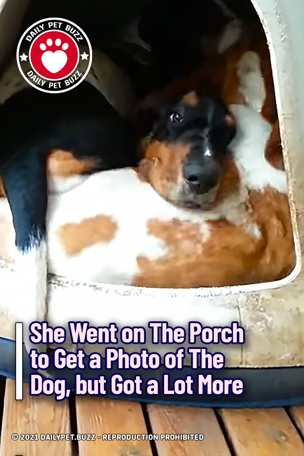 She Went on The Porch to Get a Photo of The Dog, but Got a Lot More