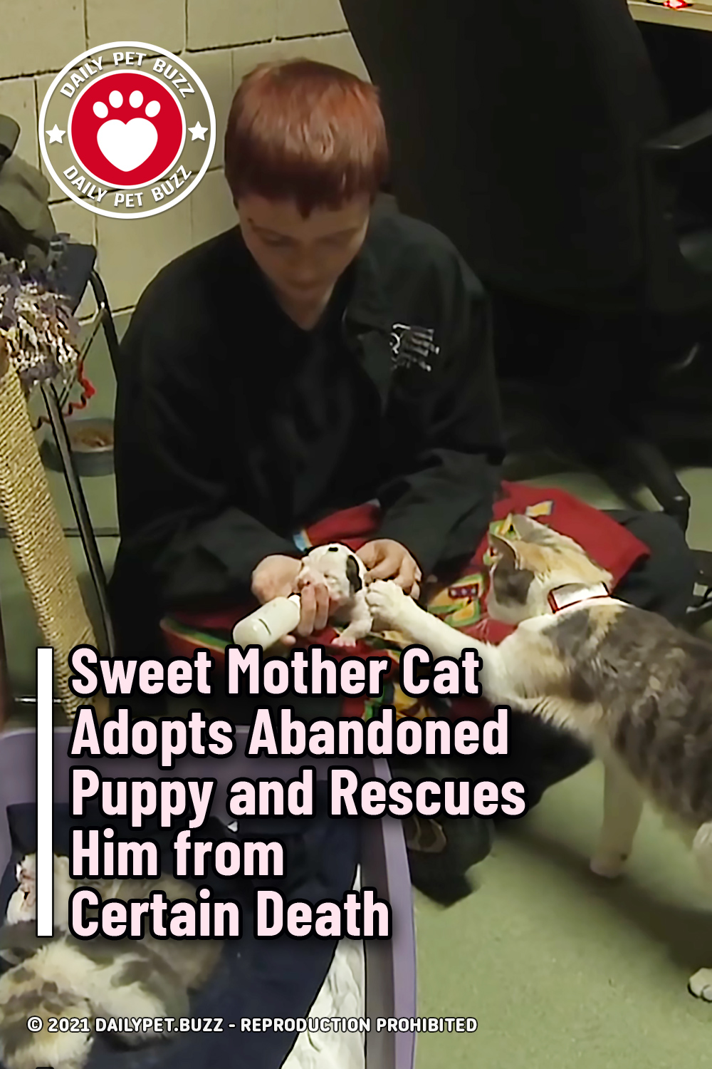 Sweet Mother Cat Adopts Abandoned Puppy and Rescues Him from Certain Death