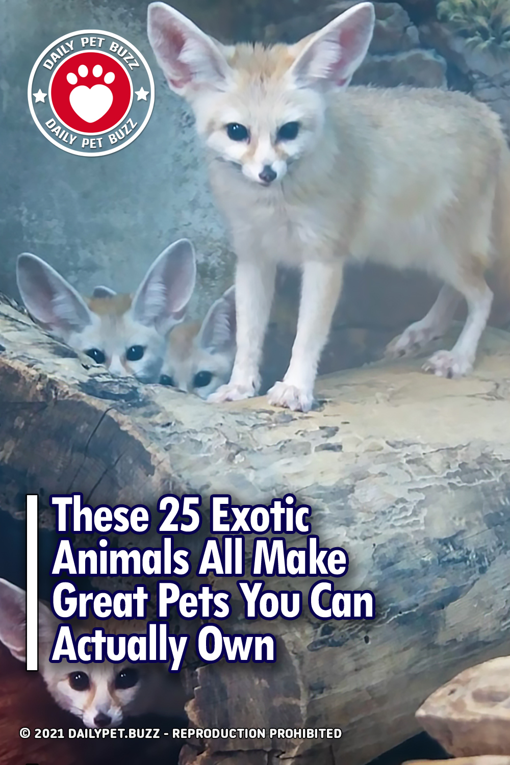These 25 Exotic Animals All Make Great Pets You Can Actually Own