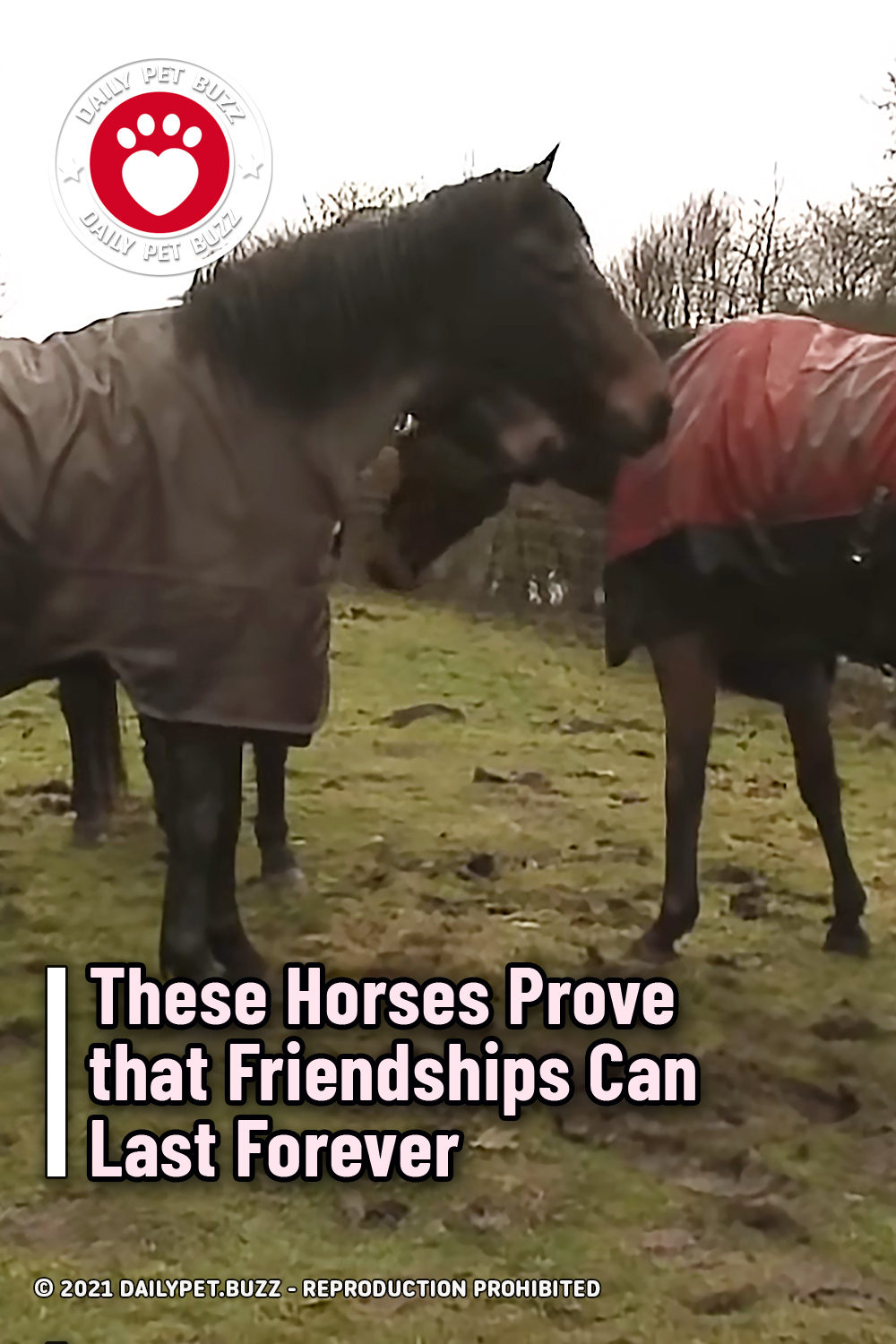 These Horses Prove that Friendships Can Last Forever