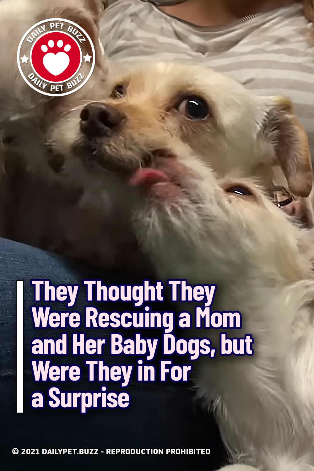 They Thought They Were Rescuing a Mom and Her Baby Dogs, but Were They in For a Surprise