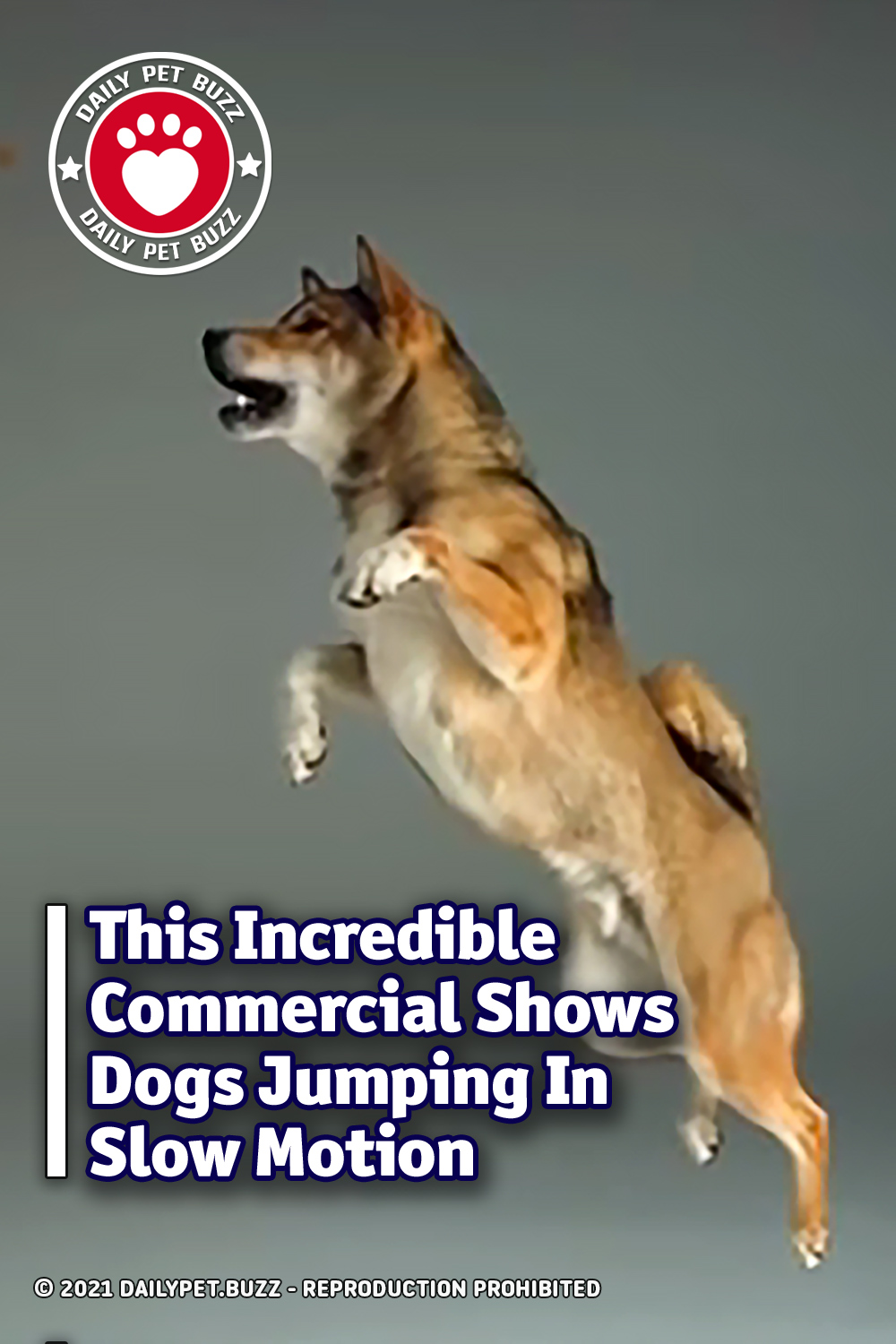 This Incredible Commercial Shows Dogs Jumping In Slow Motion