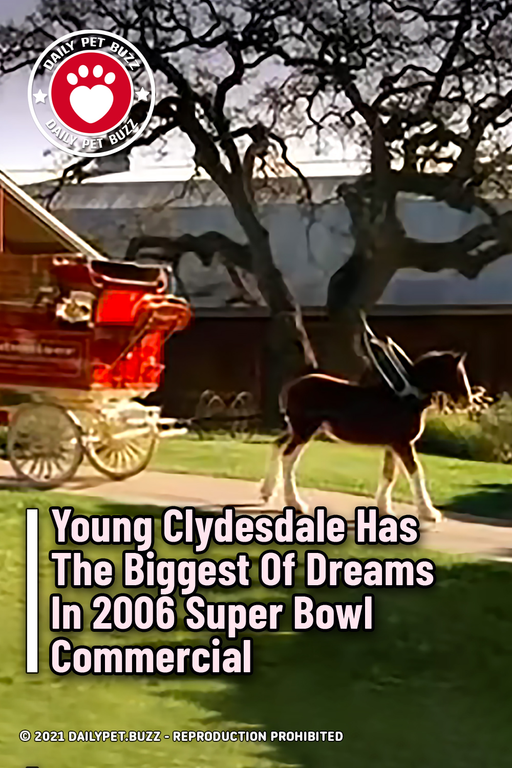 Young Clydesdale Has The Biggest Of Dreams In 2006 Super Bowl Commercial