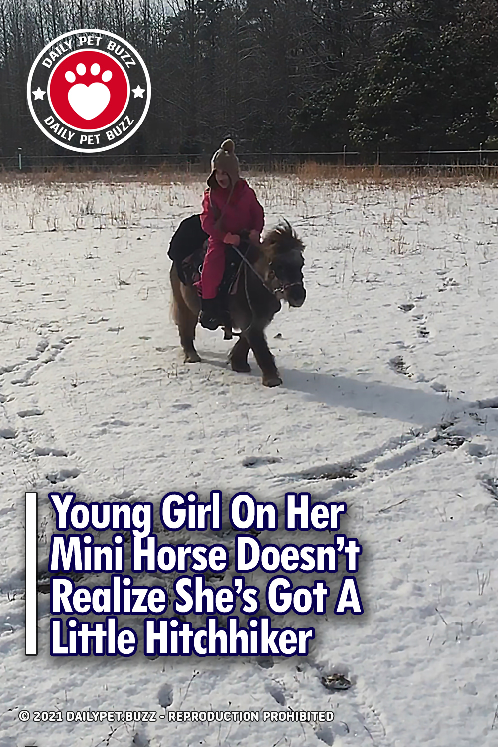 Young Girl On Her Mini Horse Doesn\'t Realize She\'s Got A Little Hitchhiker