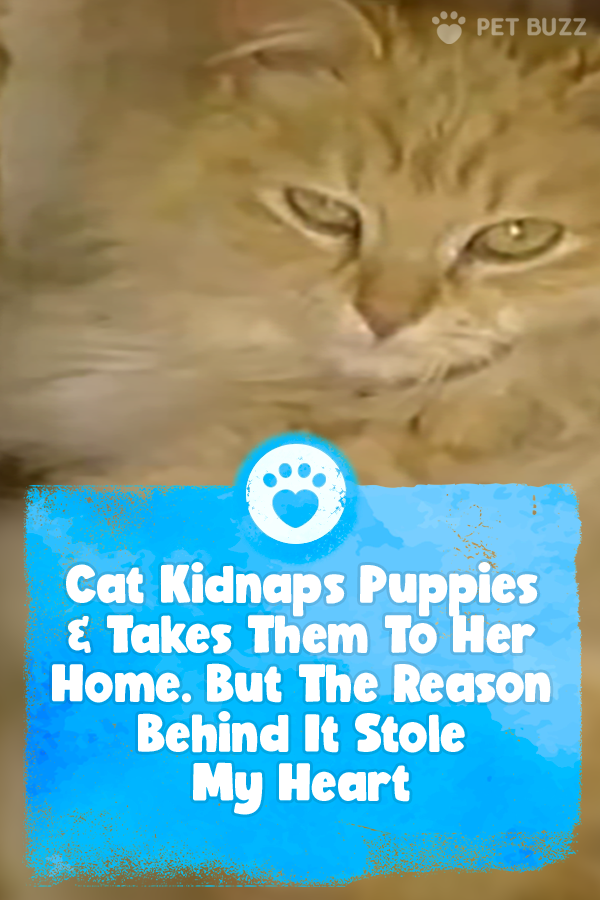 Cat Kidnaps Puppies & Takes Them To Her Home. But The Reason Behind It Stole My Heart