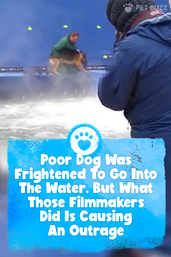 Poor Dog Was Frightened To Go Into The Water. But What Those Filmmakers Did Is Causing An Outrage