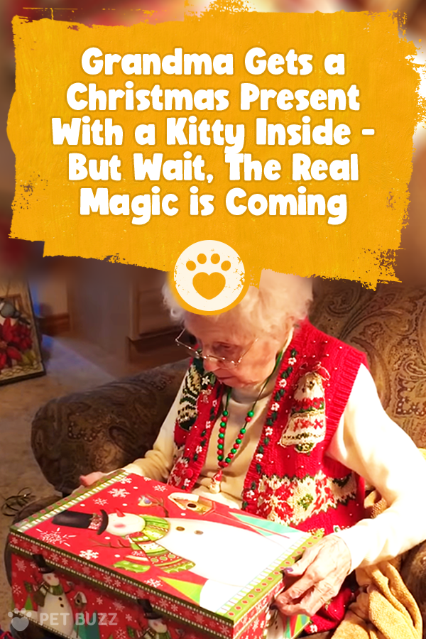 Grandma Gets a Christmas Present With a Kitty Inside - But Wait, The Real Magic is Coming