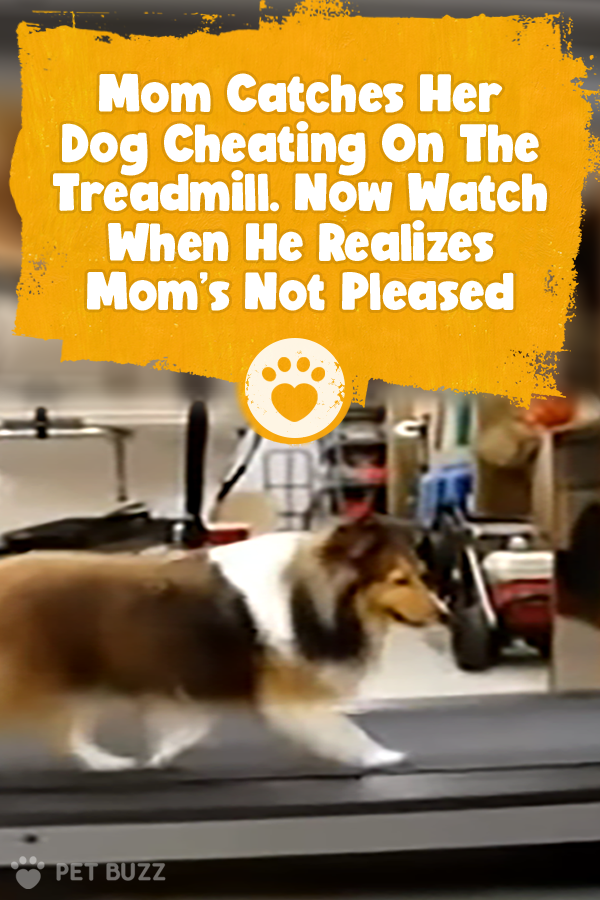 Mom Catches Her Dog Cheating On The Treadmill. Now Watch When He Realizes Mom\'s Not Pleased