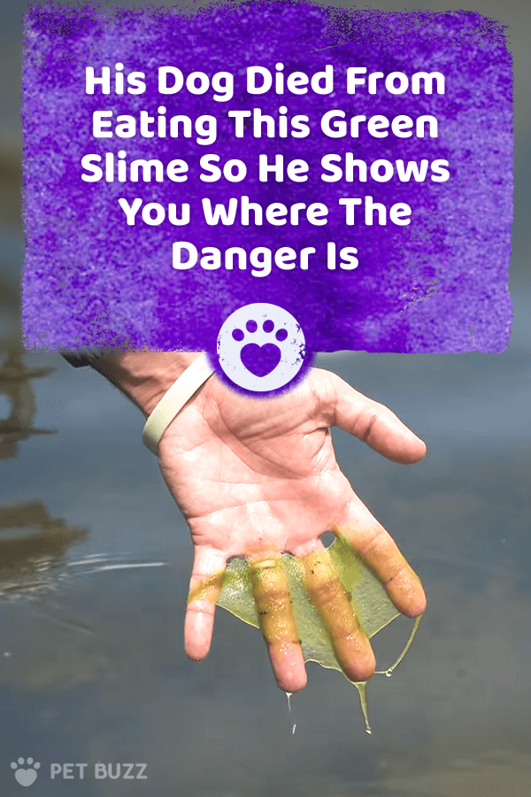 His Dog Died From Eating This Green Slime So He Shows You Where The Danger Is