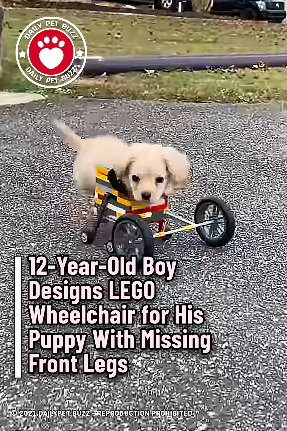 12-Year-Old Boy Designs LEGO Wheelchair for His Puppy With Missing Front Legs