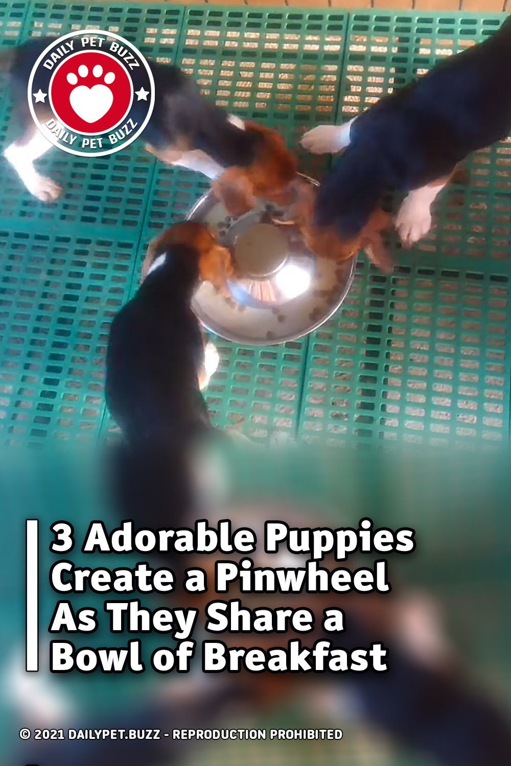 3 Adorable Puppies Create a Pinwheel As They Share a Bowl of Breakfast