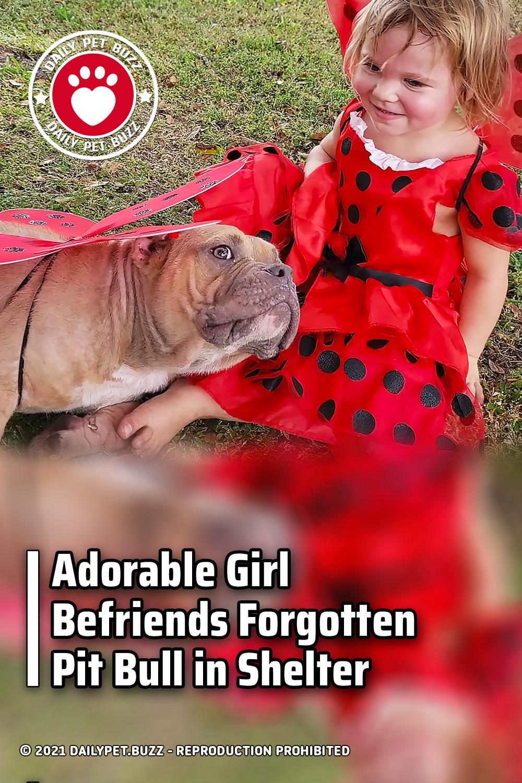 Adorable Girl Befriends Forgotten Pit Bull in Shelter