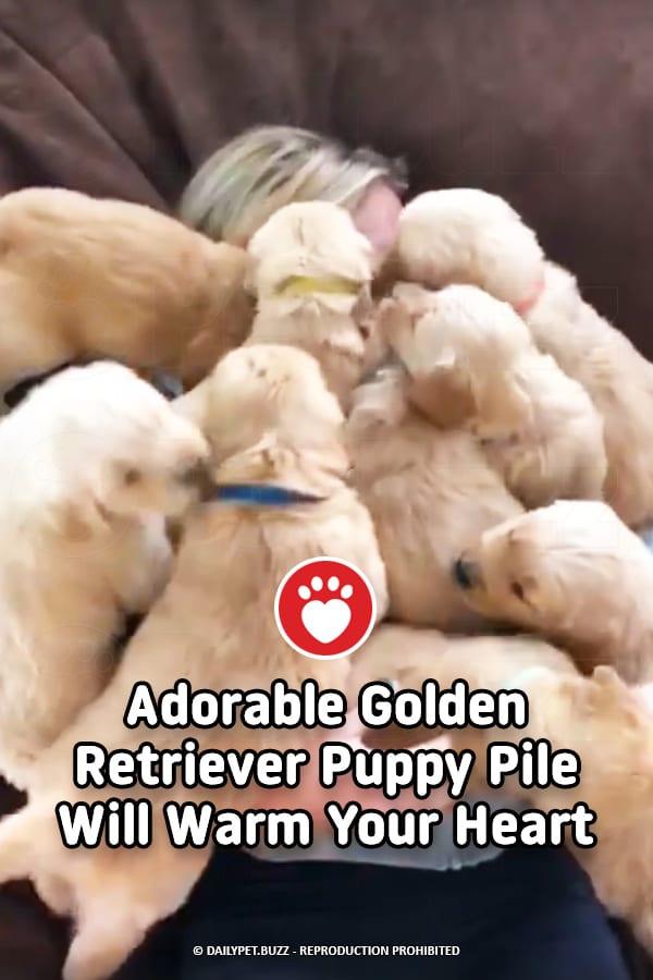Adorable Golden Retriever Puppy Pile Will Warm Your Heart