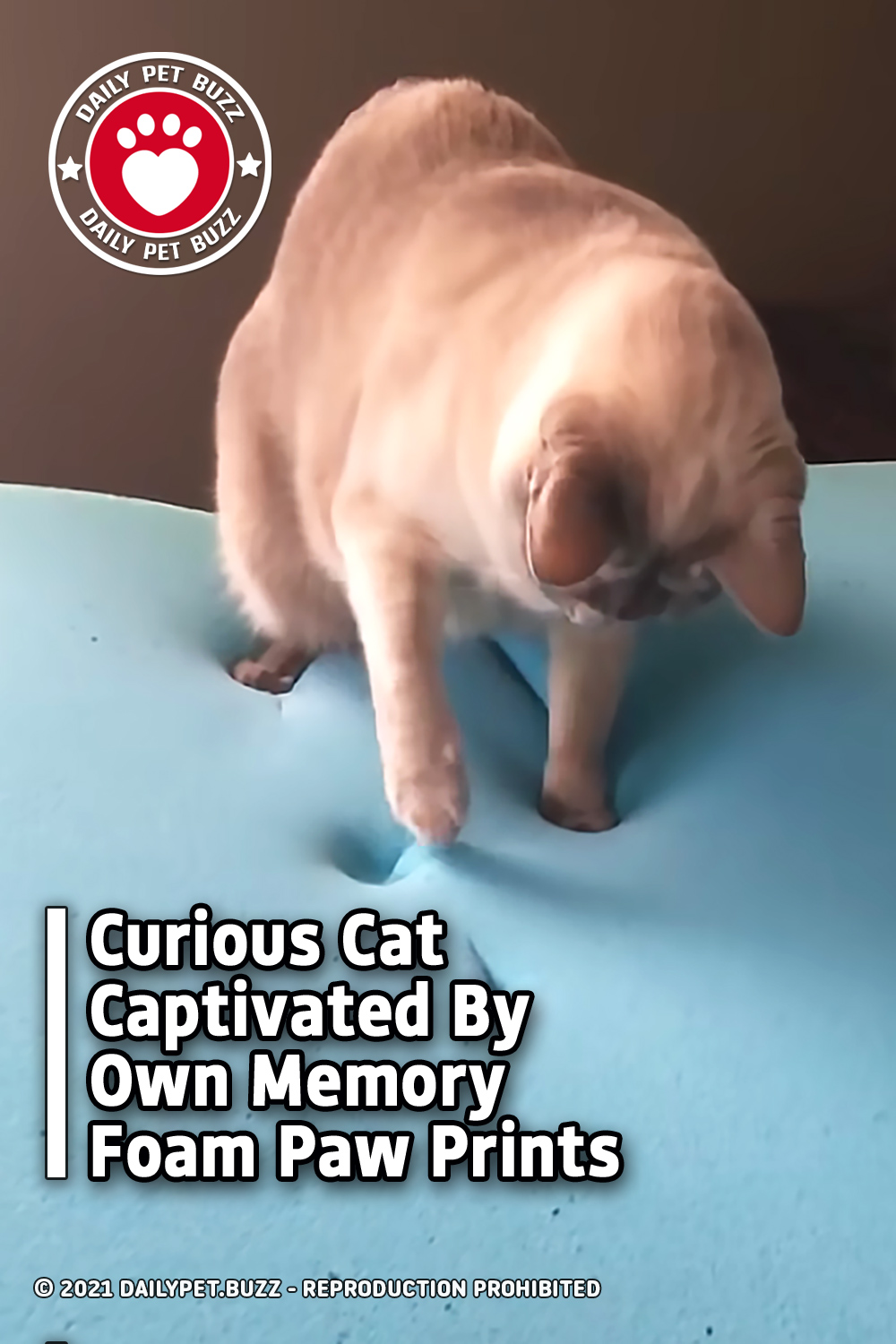 Curious Cat Captivated By Own Memory Foam Paw Prints