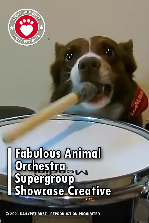 Fabulous Animal Orchestra Supergroup Showcase Creative