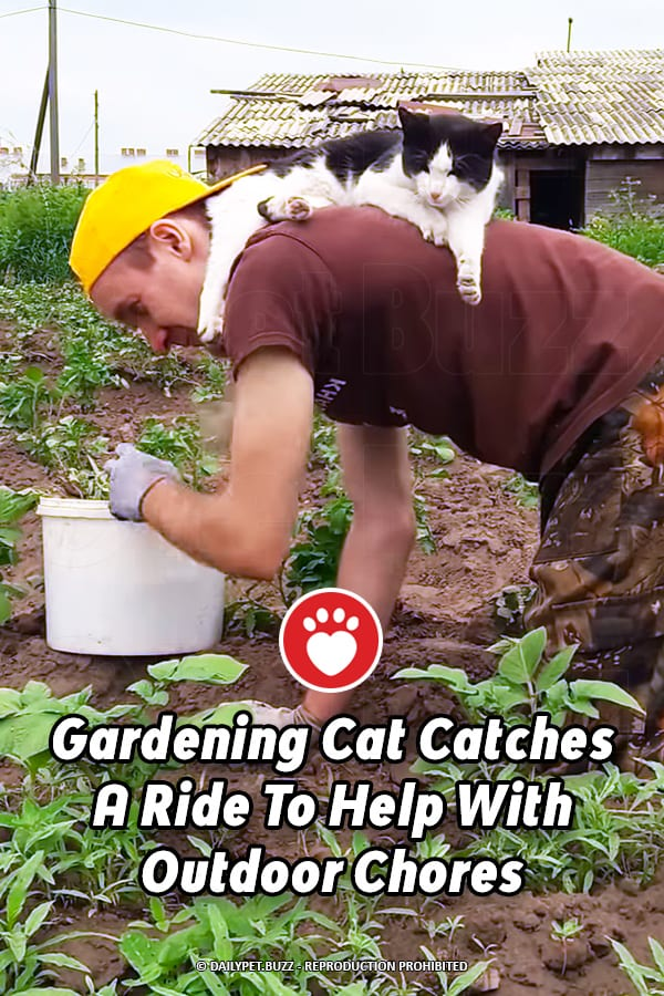 Gardening Cat Catches A Ride To Help With Outdoor Chores
