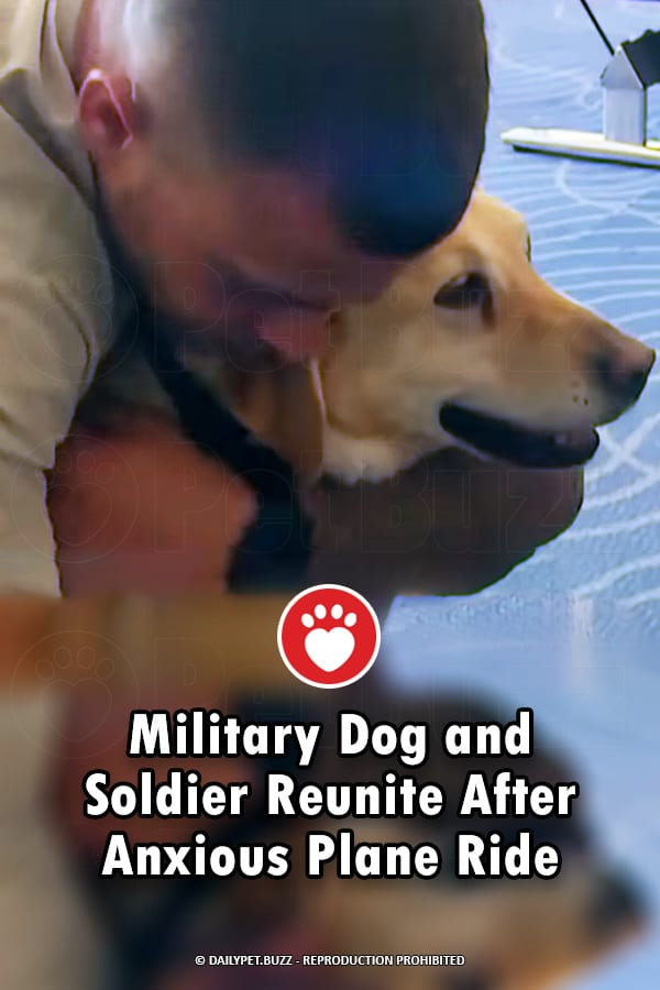 Military Dog and Soldier Reunite After Anxious Plane Ride