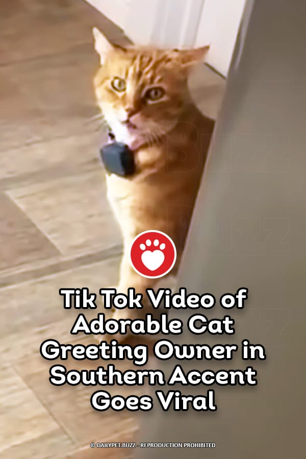 Tik Tok Video of Adorable Cat Greeting Owner in Southern Accent Goes Viral