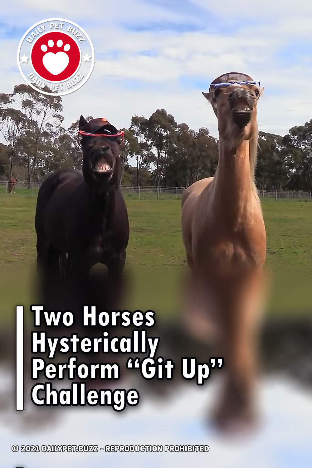 """Two Horses Hysterically Perform """"Git Up"""" Challenge"""